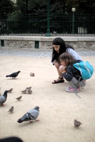 beware the pigeons