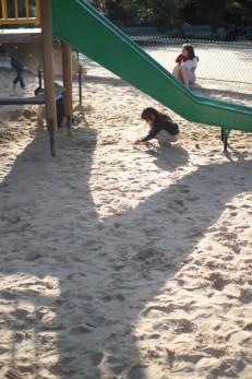 Poppy burrowing